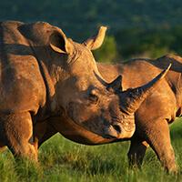 Safari experience, South Africa