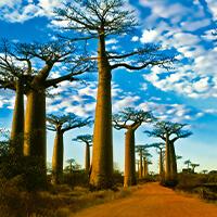 Baobab Avenue, Madagascar